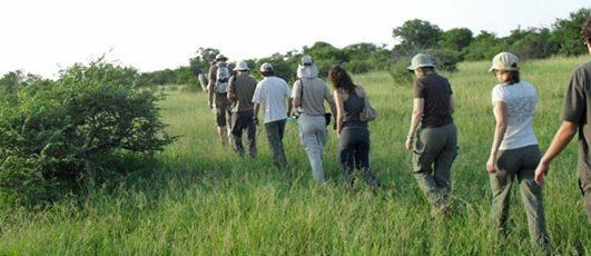MORNING SAFARI – Vomba Tours & Safaris